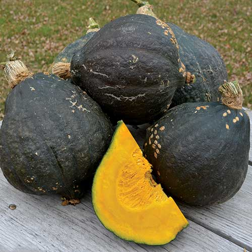 Summer and Winter Squash